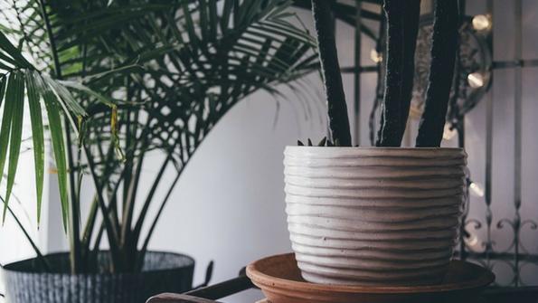 7 indoor plants for better health