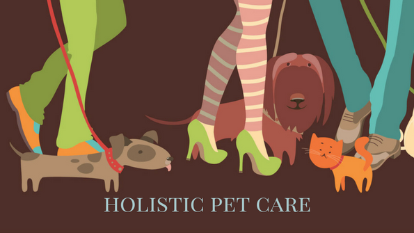 5 holistic and natural ways to care for your pet