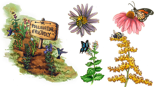 5 pollinator-friendly plants for your garden